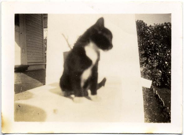 fp2258(Blur-Cat-Backdrop)