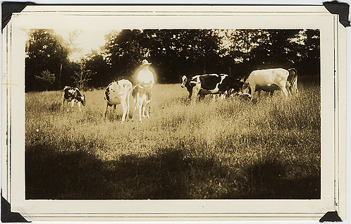 GLOWING YOUNG COWBOY in HAT and COWS in FIELD