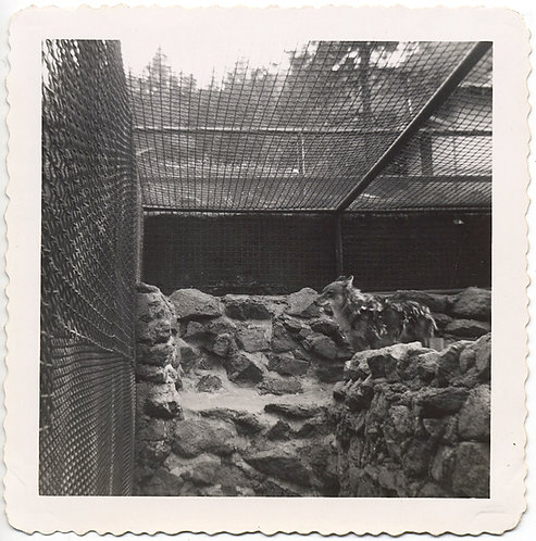 MONOCHROME FAILURE DOGOTE ZOO FENCED in MERGES w BACKGROUND WHERE's COYDOG WALDO