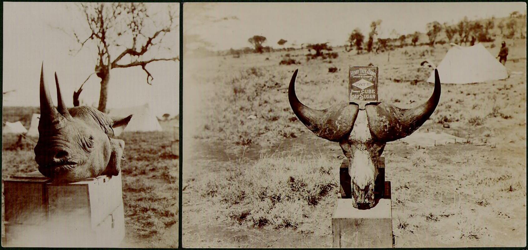 fp0017-0024(animal-head-combo)