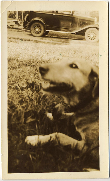 LOVELY PET DOG QUEEN and VINTAGE CAR SHARE FRAME and CAPTION!