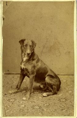 fp0810 (dog)