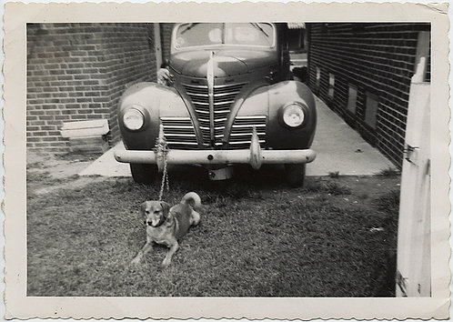 DOG PULLS VINTAGE CAR CHAINED TO CAR!