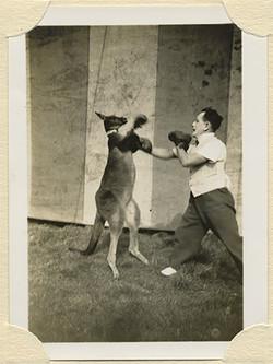 fp8238(Boxing-Kangaroo-detail)