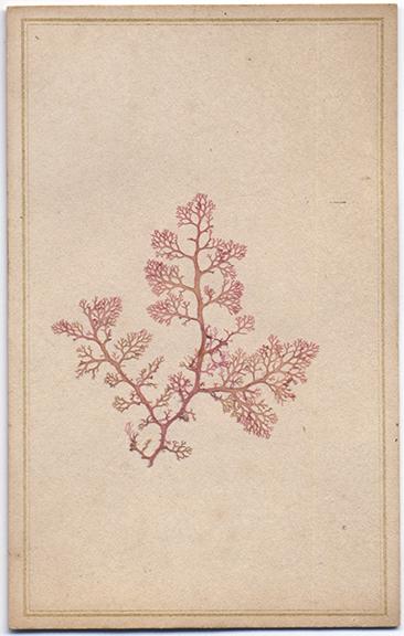 fp4887(CDV_PlantSample)