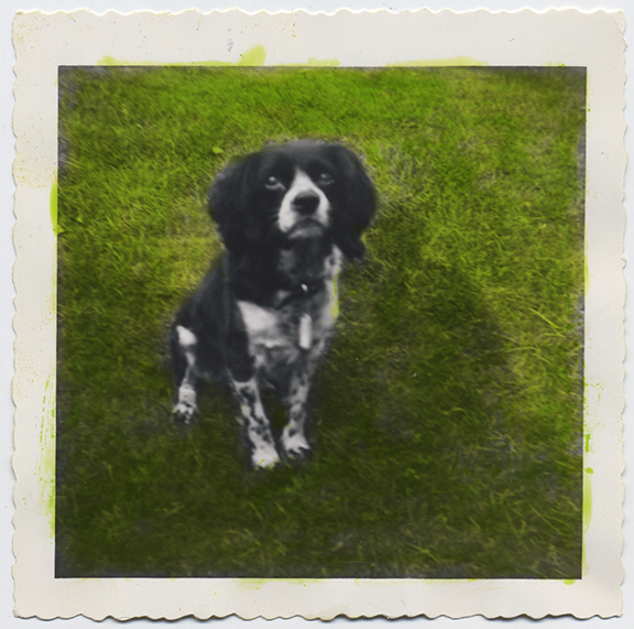 fp3945(Spaniel_Seated_Grass-tinted)