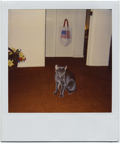 WHO LET THE CAT OUT of the BAG? PATRIOTIC FLAG TOTE & HISSING KITTY POLAROID