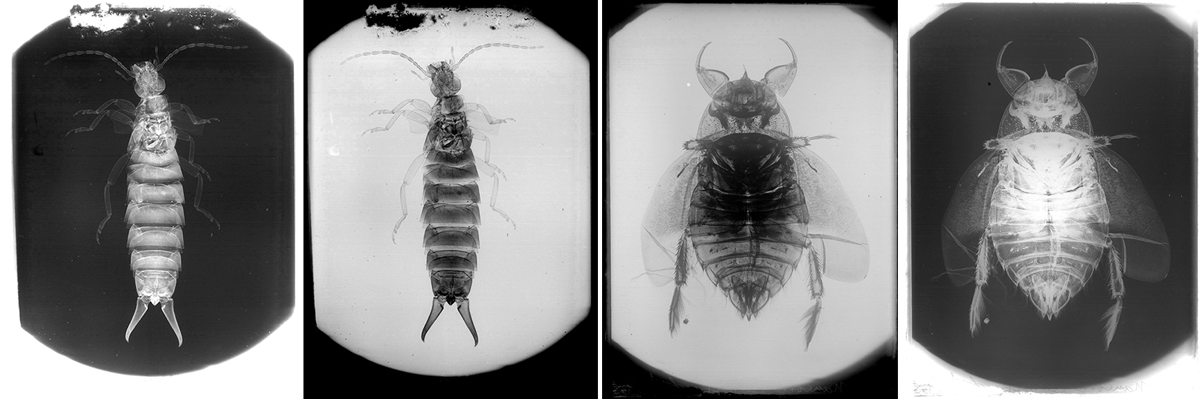 fp6082-6084(SL-NEG_Insect-combo)