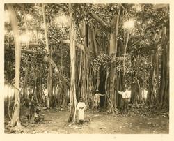 fp0367(JamaicanBoys&BanyanTree)