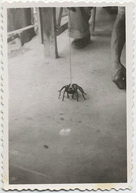 BIZARRE RARE STRANGE MAN WALKS HUGE SPIDER on LEASH WIERD!
