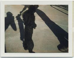 fp4646(PO_DancingPoodle_Shadows)