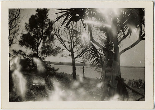 LAKEFRONT TREES in DAPPLED LIGHT-LEAKED SUNLIGHT! (& HIDDEN FIGURE)