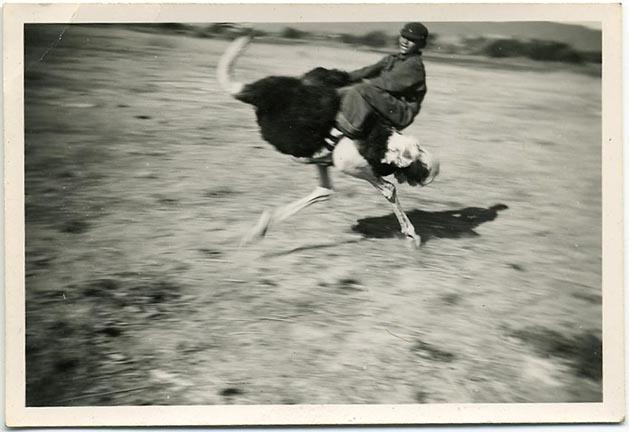 fp1324 (boy rides ostrich)