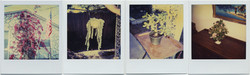 fp8864-7(PO-Plants-Gp)