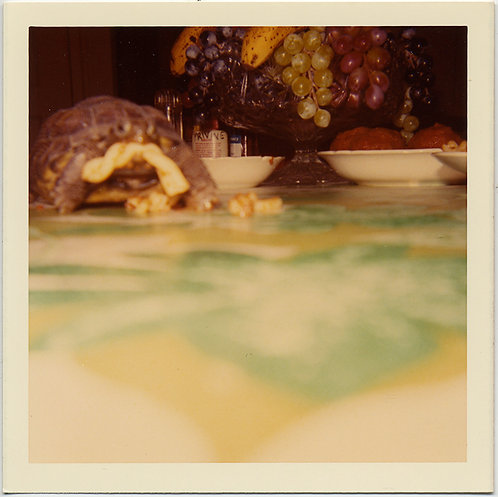 WONDROUS COLOR SOFT FOCUS TURTLE TORTOISE SNACKS on MACARONI PASTA