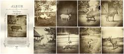 fp10468-480(Lucy-Fassarieu-Zoo-combo)