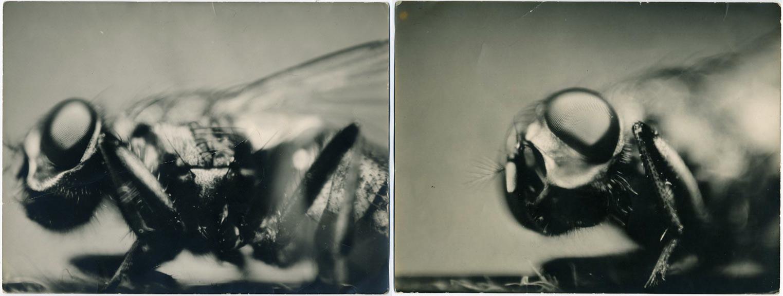 fp1395combo(fly)