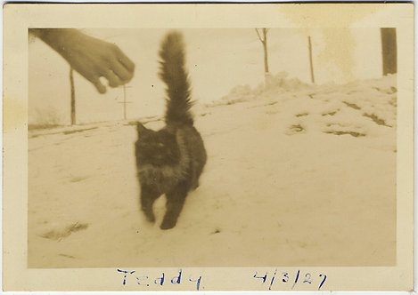 DISEMBODIED HAND LURES CAT KITTY NAMED TEDDY on SNOWBOUND GROUND