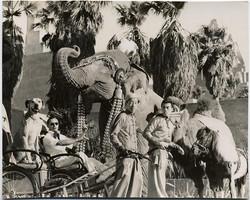 fp1761 (rickshaw-dog-movieset)