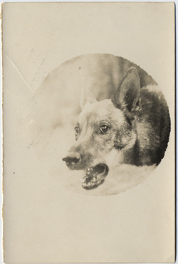 fp5713(Wolf_Teeth)