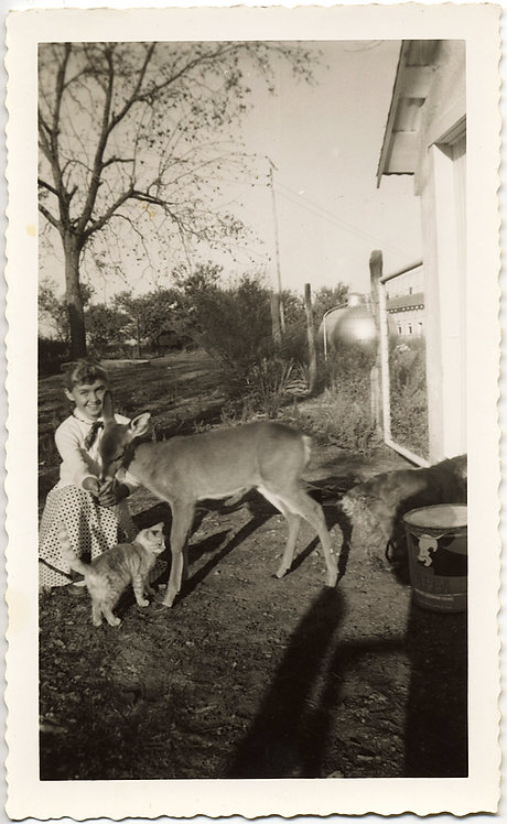GORGEOUS YOUNG GIRL FEEDS DEER PET KITTY CAT LINGERS SHADOWS & SUNLIT BEAUTY