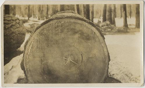 STUNNING SAWN THROUGH TIMBER LOG FELLED TREE MODERNIST SIMPLICITY