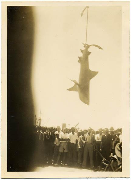 fp0919 (shark suspended)