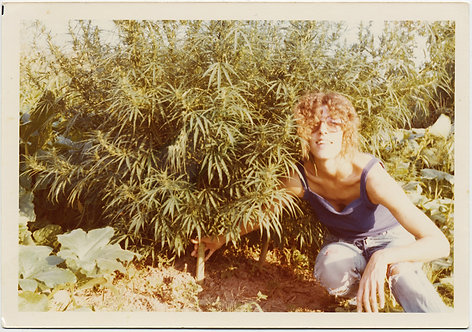 PRETTY WOMAN Jude HOLDS CANNABIS MARIJAUANA POT PLANT GREAT CAPTION