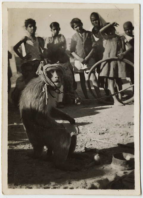 HAUNTING SAD MONKEY PET PERFORMER w INDIAN CHILDREN WATCHING