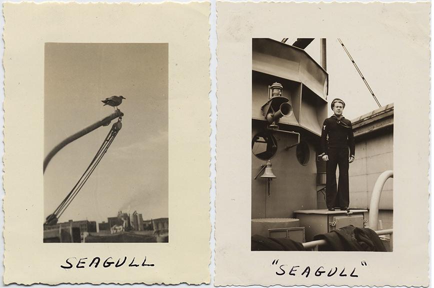fp6584combo(Seagull)