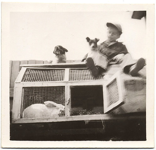 FABULOUS LITTLE BOY PET JACK RUSSELL TERRIER DOG on ROOF of RABBIT HUTCH BUNNY