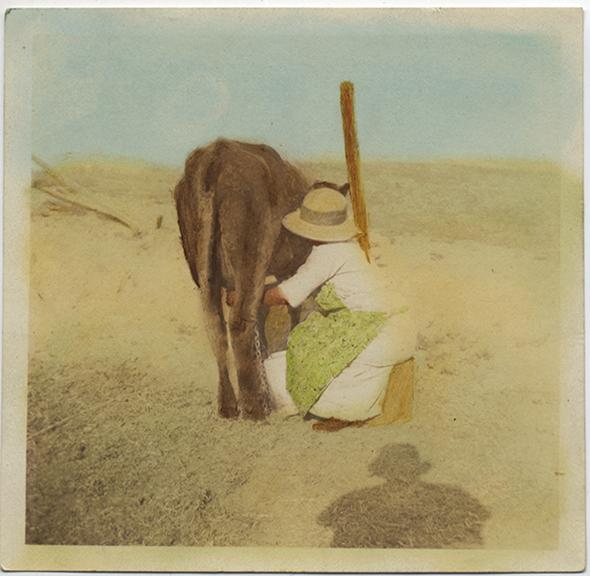 fp4983(Milkmaid_Desert_Donkey_Tinted)