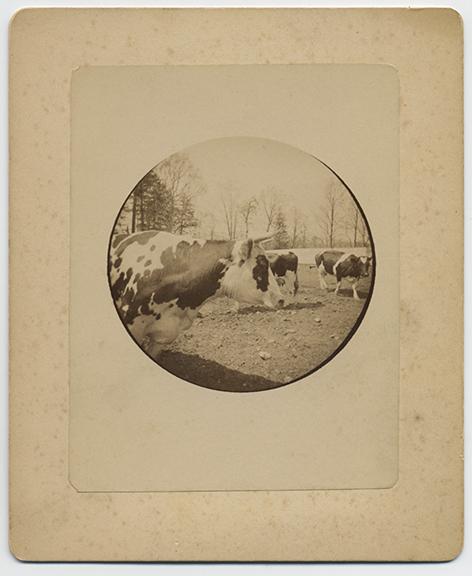 fp3738(K1_CowsInField)