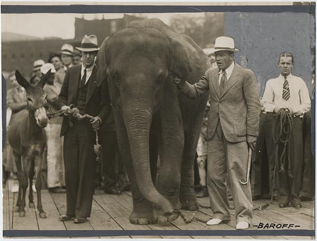 fp2497(Baroff_PF_Men_Elephant_Donkey)