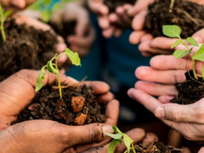 Bringing in Outdoor Education Into Your Classroom