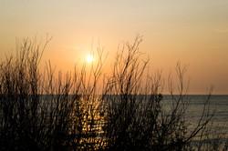 Sun through the reeds