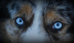 Biscuit eye