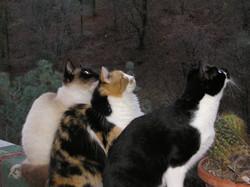 3 Kitties.