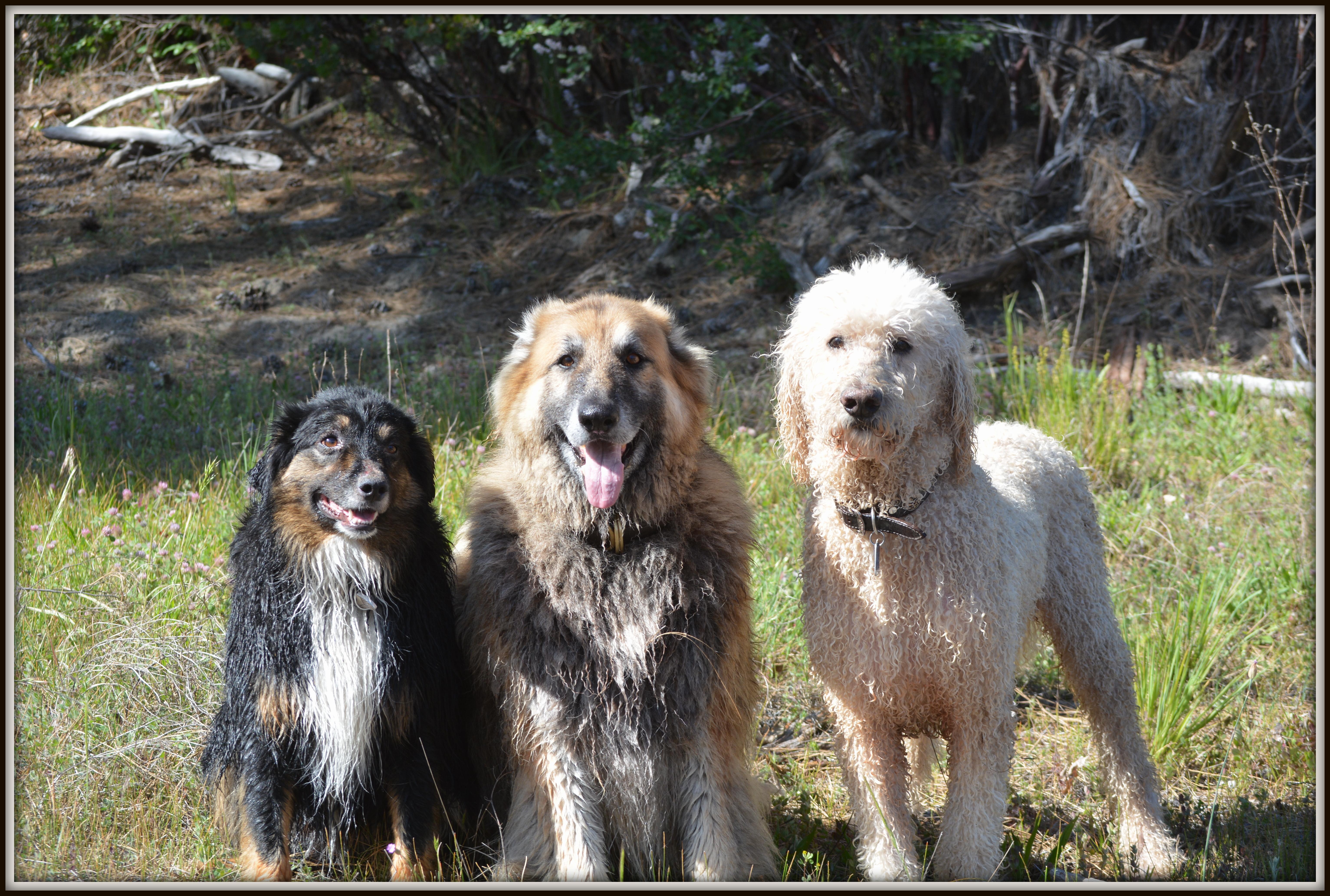 Bob, Ba and Poo