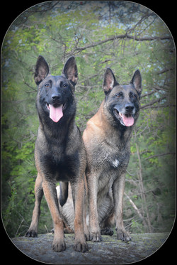 a working dog and a Service K9