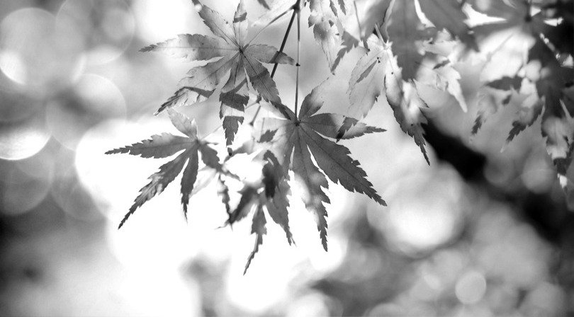 MAPLE 1_edited_edited.jpg