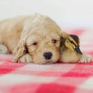 Photo of puppy and duckling