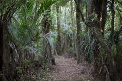 NZ Bush Walk