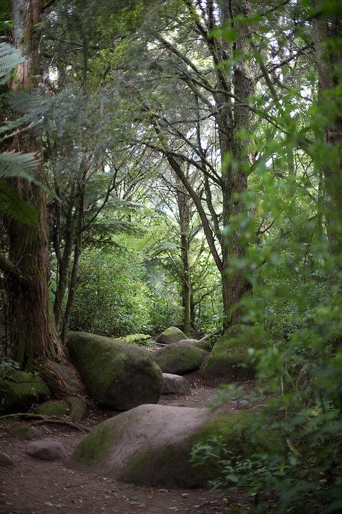 Chosen Pathway