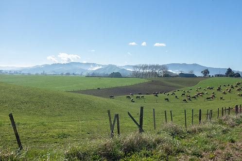 NZ Farmland