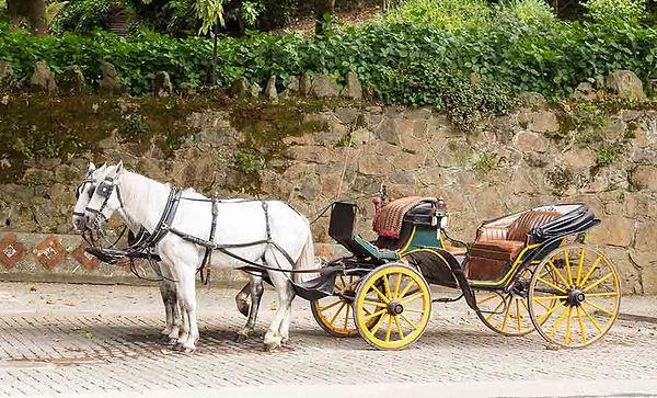 Horse-carriage.jpg