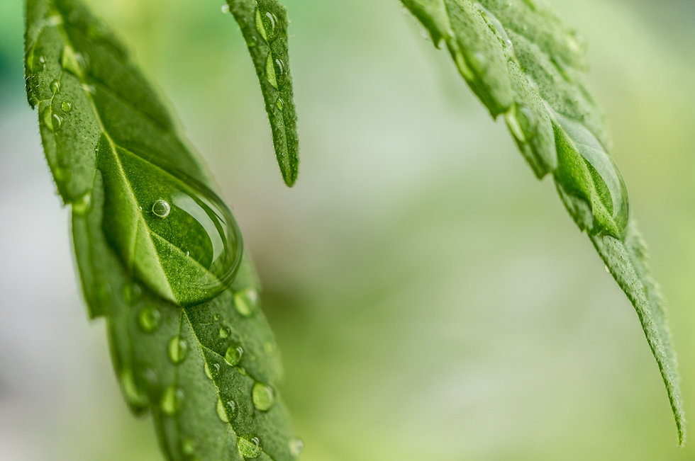 water-grass-branch-drop-dew-plant-839875-pxhere_edited.jpg