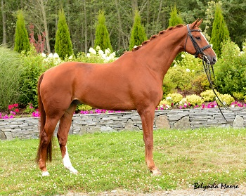 Crimson Sky - 2004 4th level Gelding