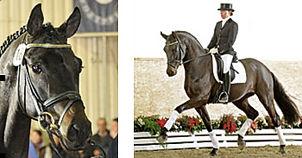 stallion-furstenball-04.jpg