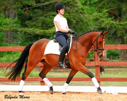 Wrythem - 2008 2nd Level Mare